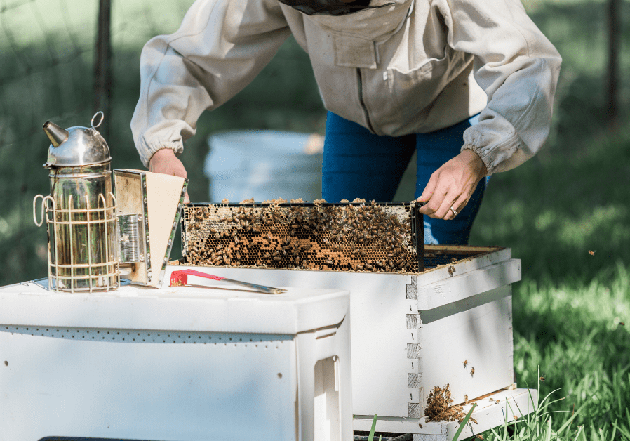 How to get into Bee Keeping